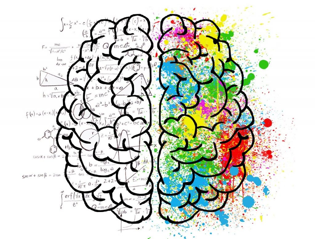 brain facts - left and right hemisphere